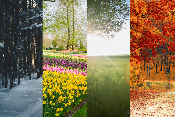 winter, spring, summer, and fall seasons